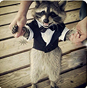 raccoon_clearcode_face_1