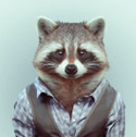 raccoon_clearcode_face_4